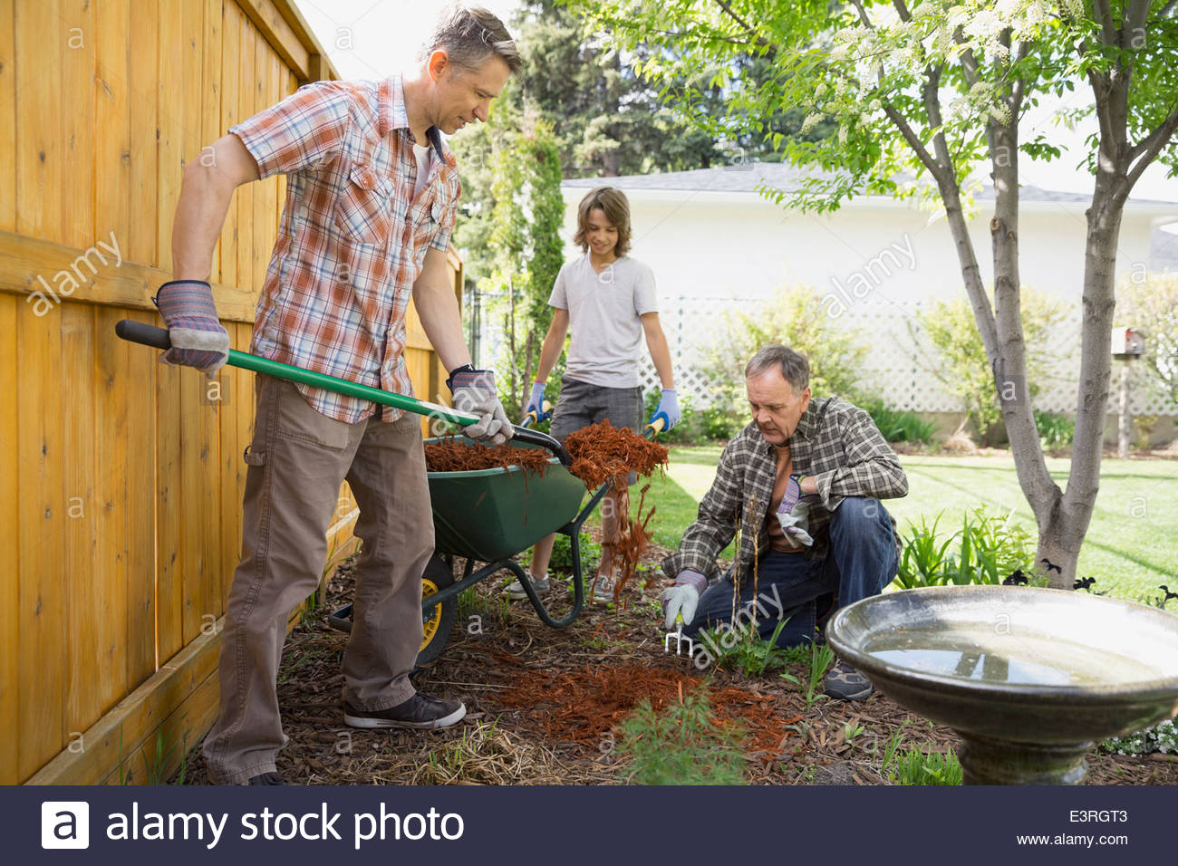 Multi-generation family spreading bark dust in backyard - Stock Image