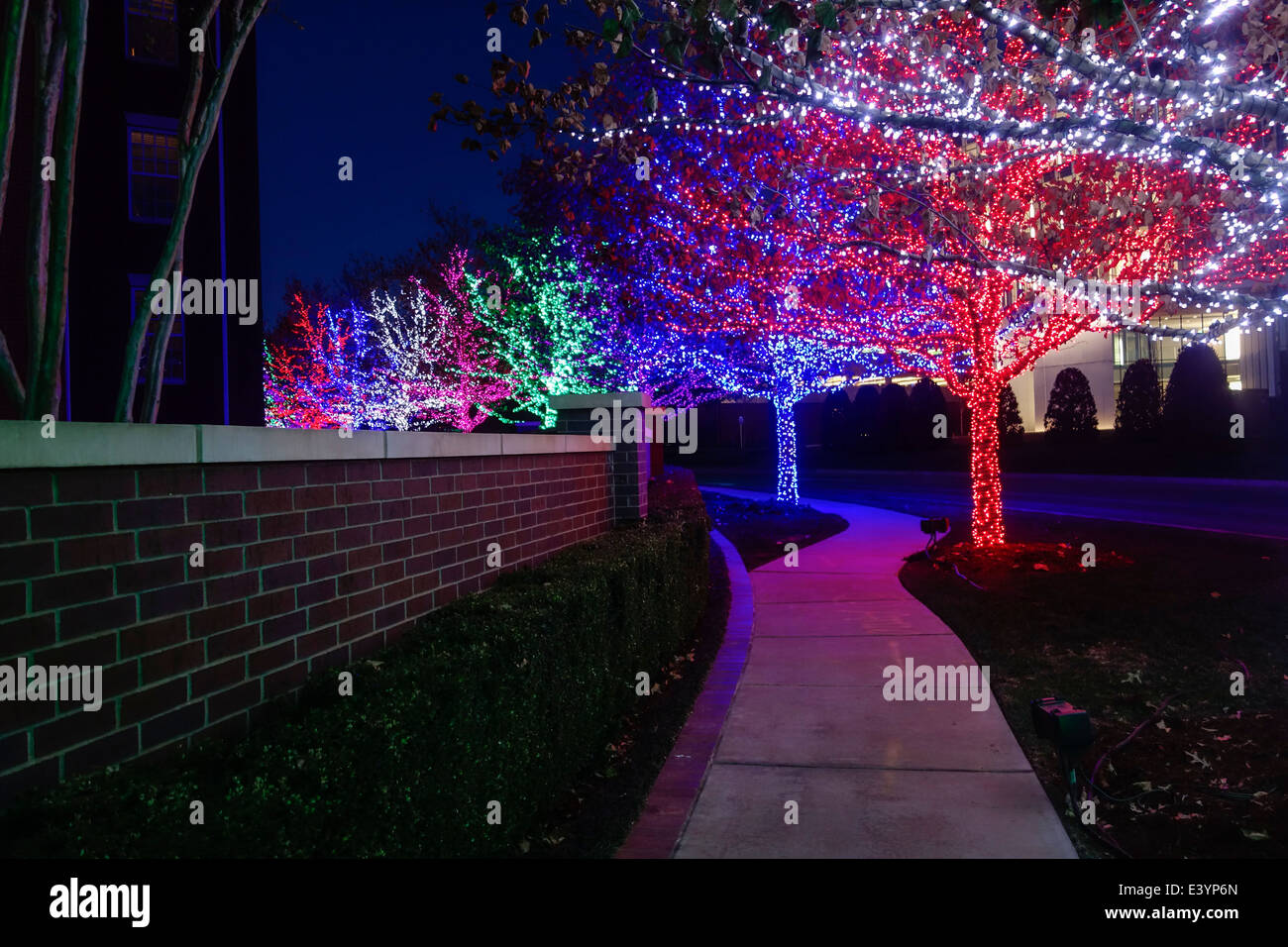 christmas-lights-adorn-trees-on-the-ches