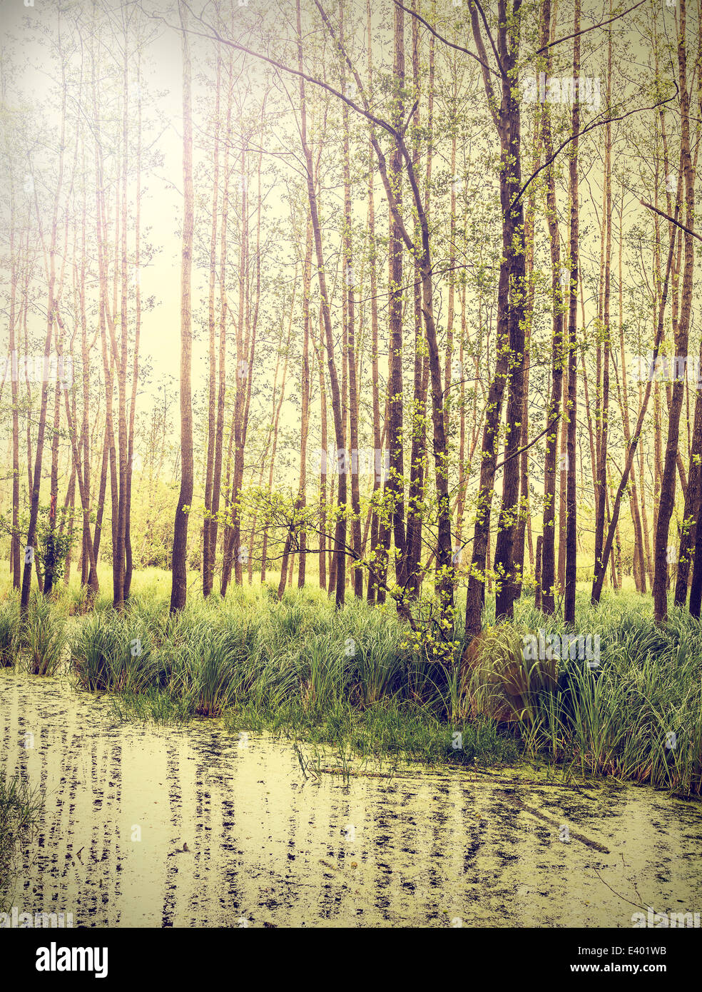 Peaceful nature vintage background. - Stock Image