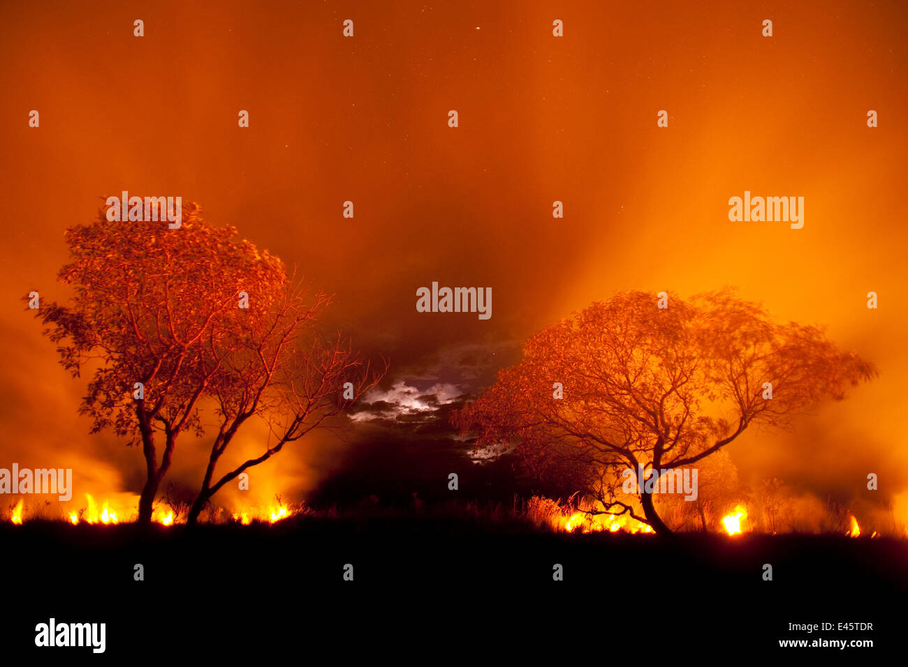 Grass fire at night in Pantanal, Brazil. - Stock Image