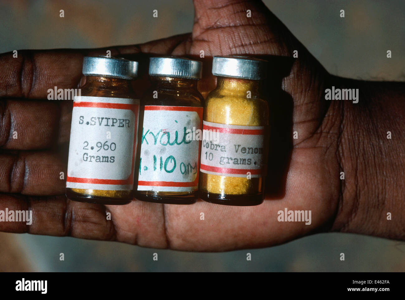 Irula Snake Tribe member holding vials of snake anti-venom for Viper, Krait and Cobra bites. Southern India. Stock Photo