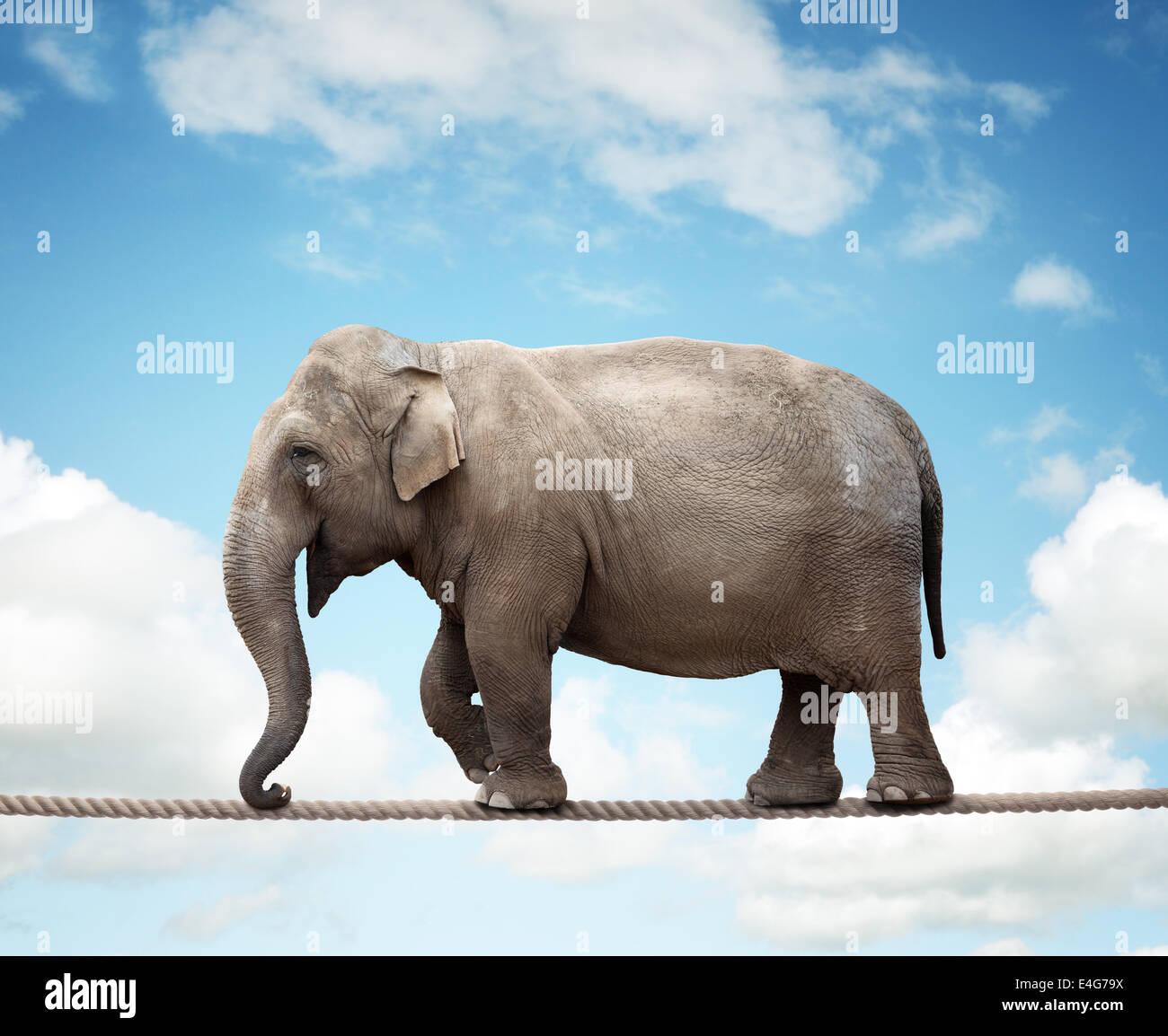 Elephant on tightrope - Stock Image