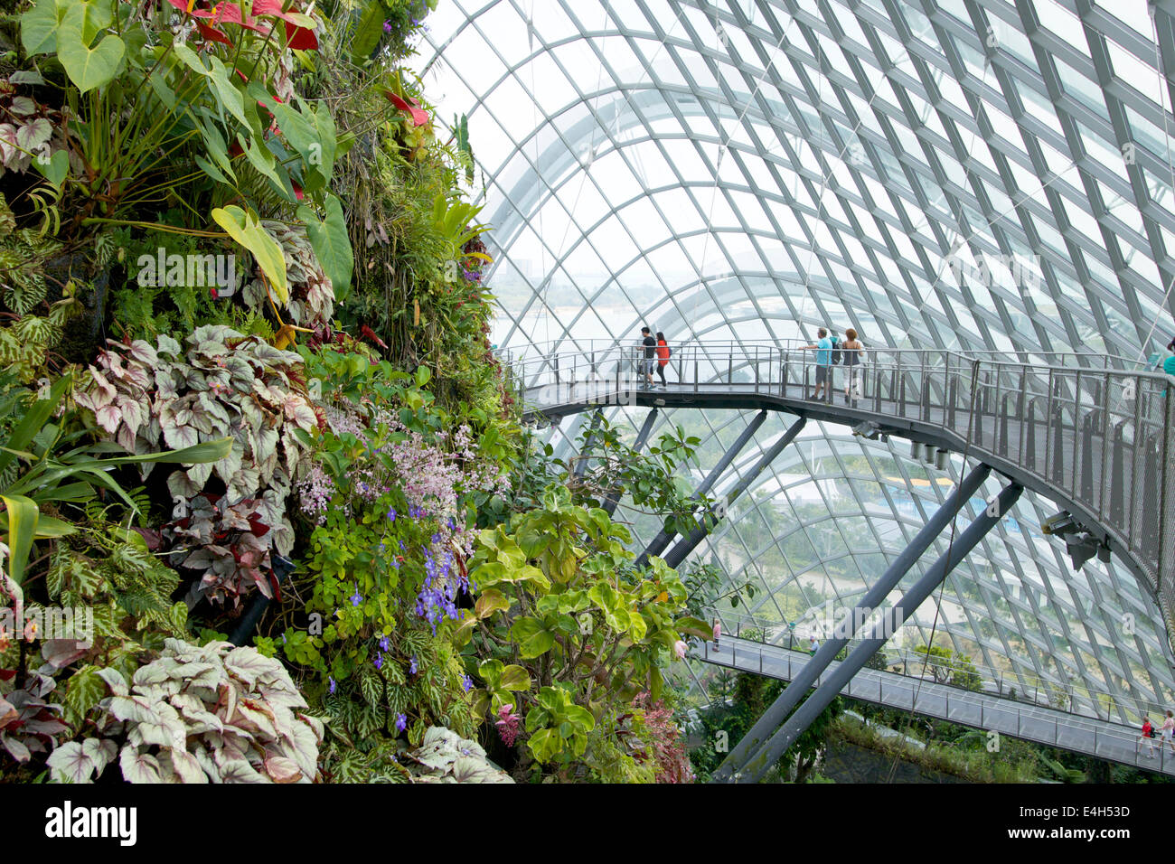 garden dome. The Tree Top Walk In Cloud Forest Dome \ Garden