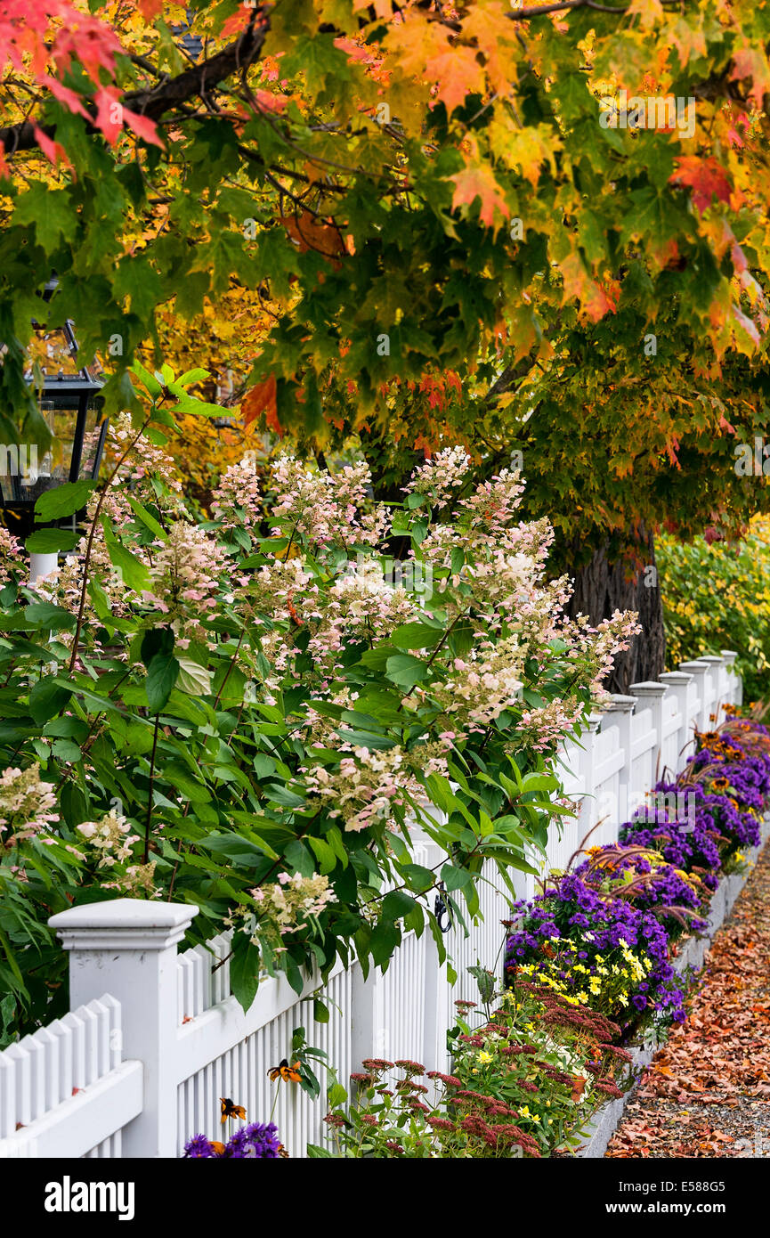 Charming white picket fence with colorful autumn trees and flowers ...