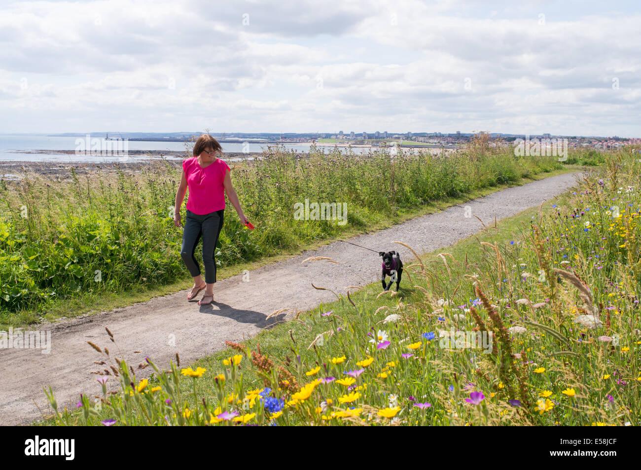 Woman walking dog along the North sea coast path Whitburn north east England, UK Stock Photo