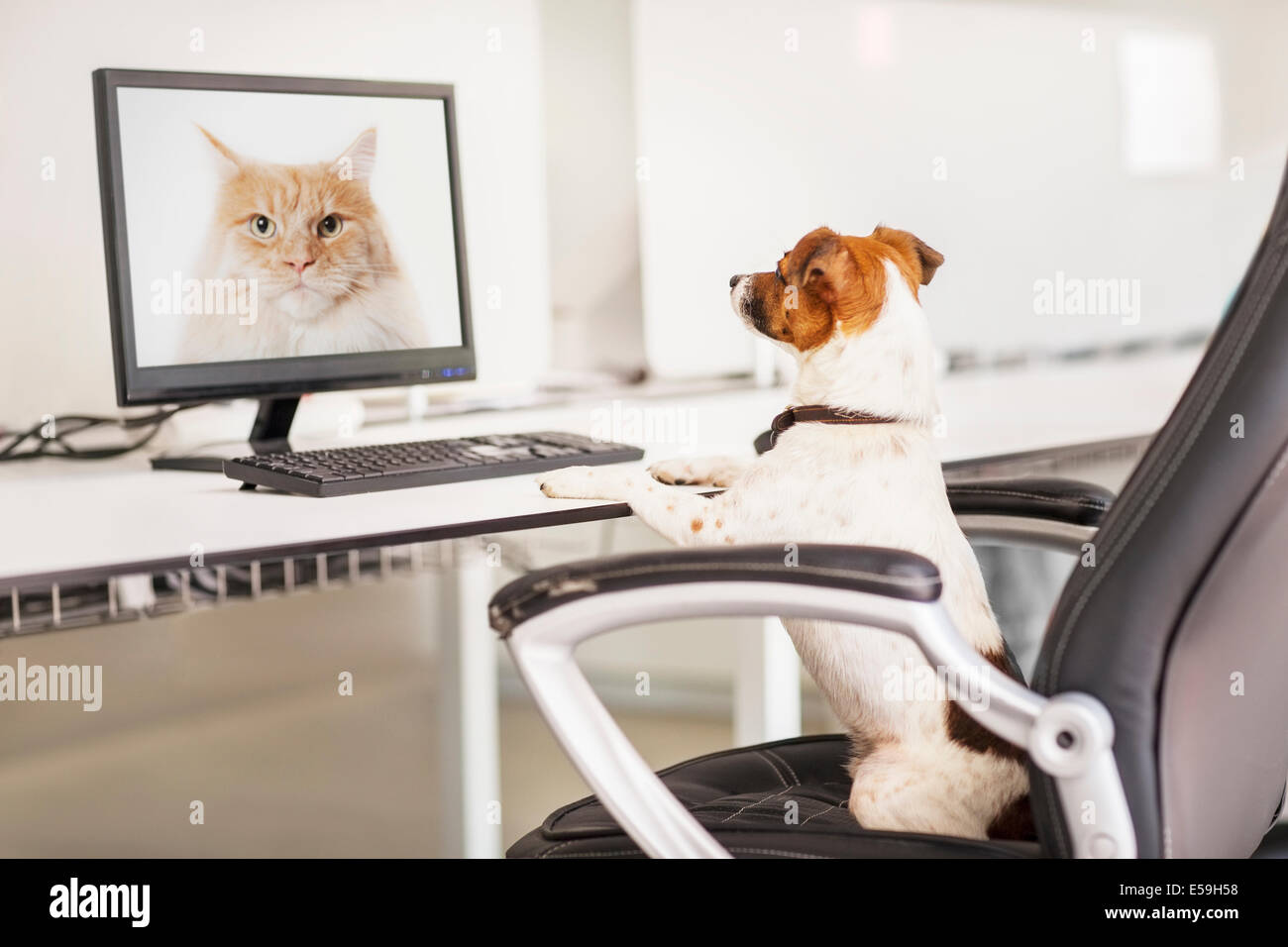 Dog sitting at desk in office - Stock Image