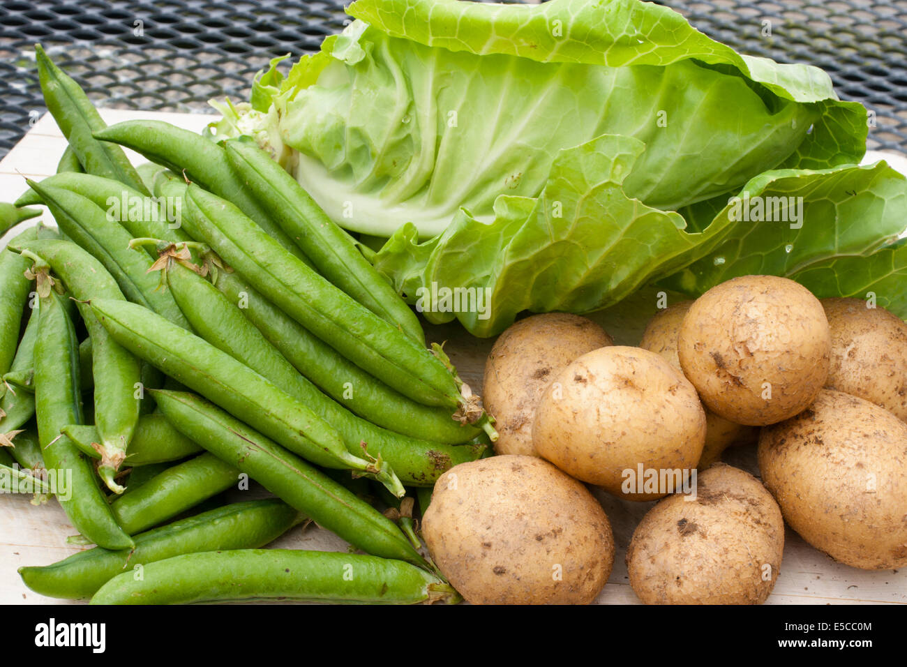 fresh-allotment-grown-organic-peas-potatoes-and-cabbage-picked-for-E5CC0M.jpg