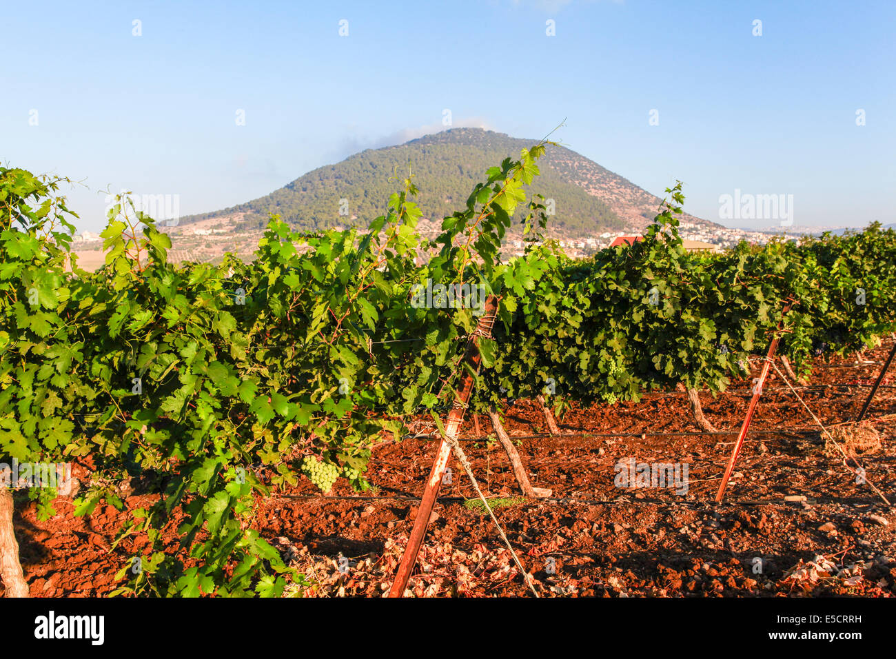 Mount Tabor is located in Lower Galilee, Israel, at the eastern end of the Jezreel Valley - Stock Image