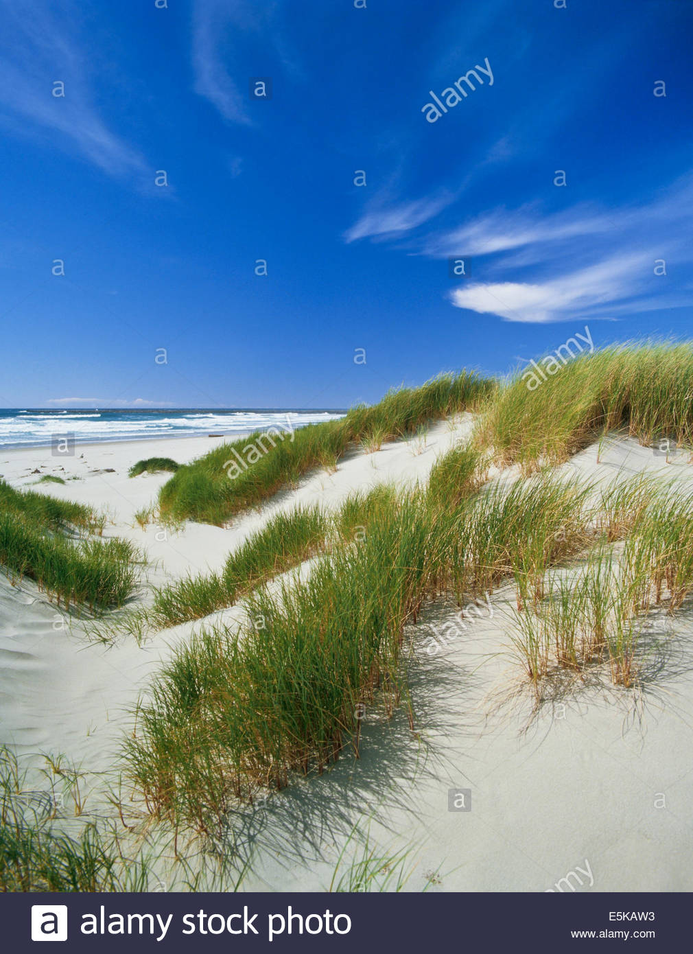 oregon-dunes-national-recreation-area-ne