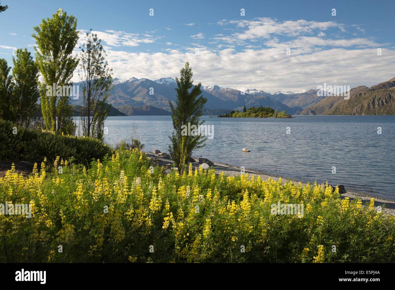 Spring Flowers On Lake Wanaka Wanaka Otago South Island New