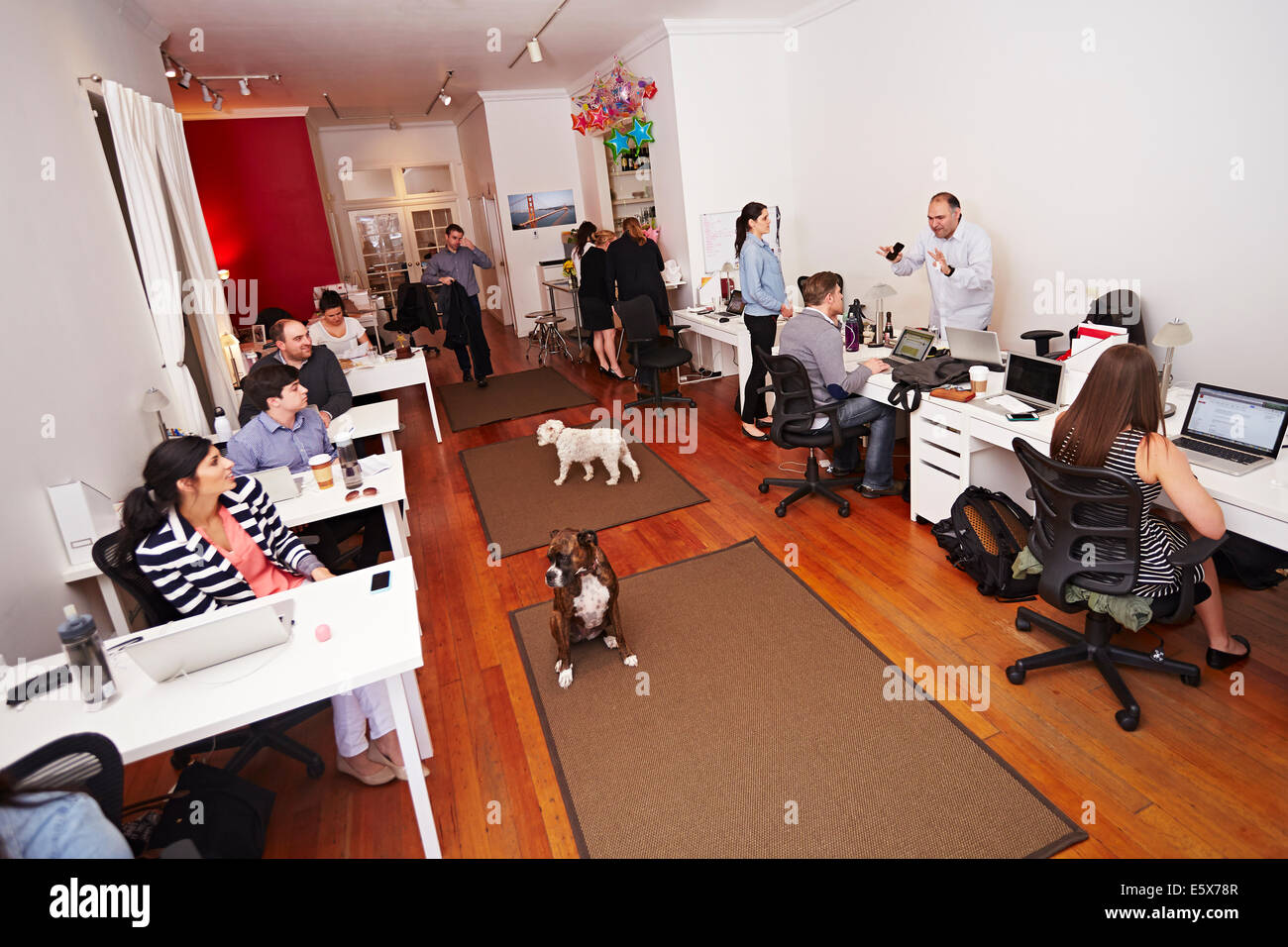 People at work in a modern office with dogs - Stock Image