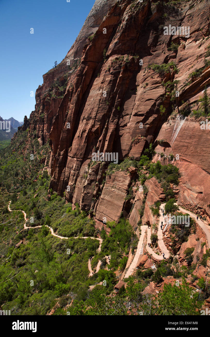 Hikers climbing up zigzag track out of Zion Canyon, up West Rim Trail and Angels Landing track, Zion National Park, Stock Photo