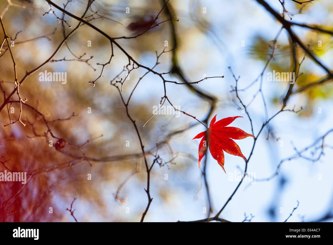 Autumn trees, Westonbirt Arboretum, Gloucestershire, UK - Stock Image
