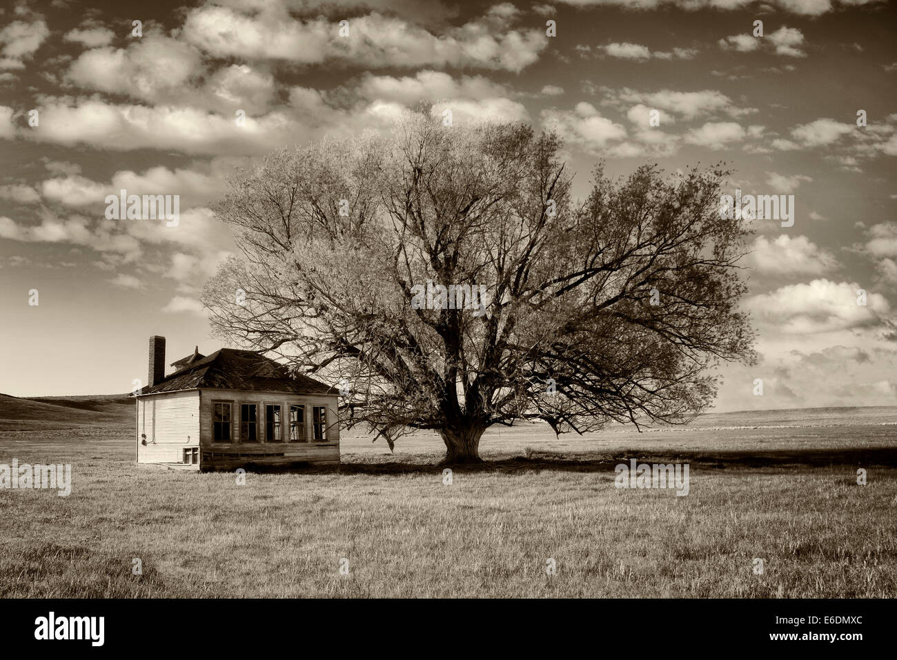 Pioneer Schoolhouse and lone tree in pasture. Near Jordan Valley. Eastern Oregon - Stock Image