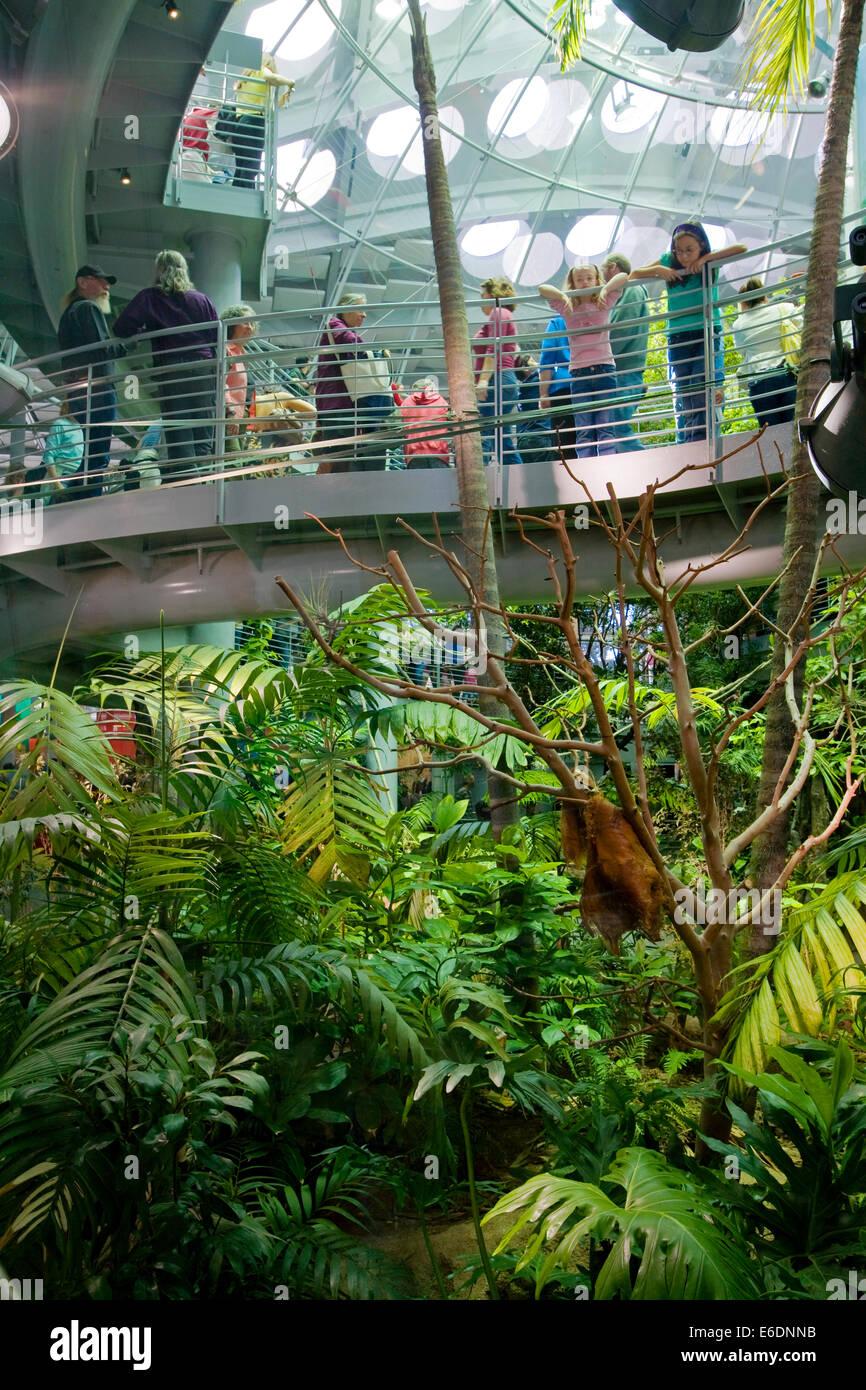 Rainforests of the World Exhibit, California Academy of Sciences, Golden Gate park, San Francisco, California, USA. - Stock Image