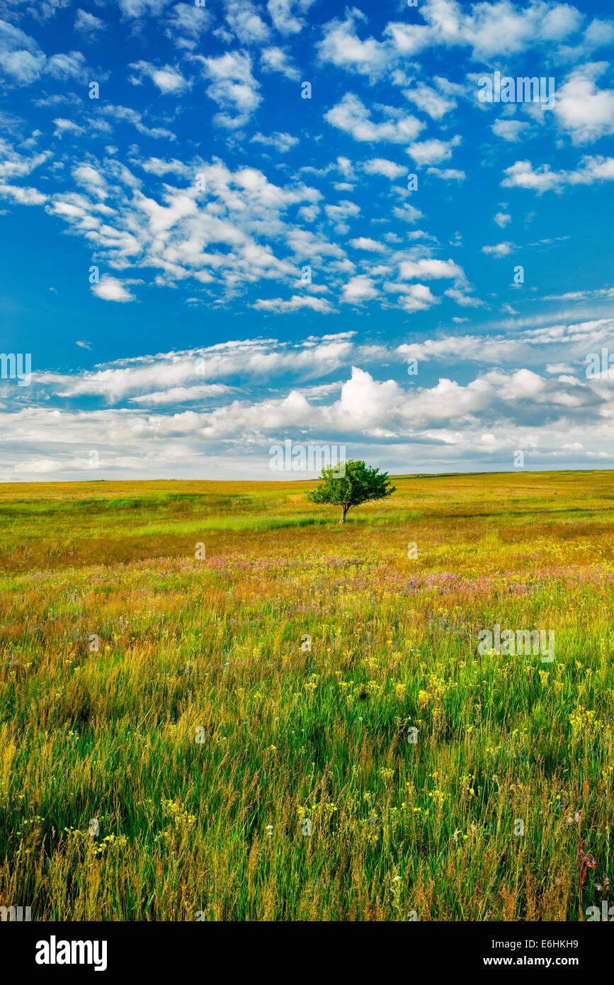 Lone tree and wildflowers. Zumwalt Prairie Preserve, Oregon - Stock Image