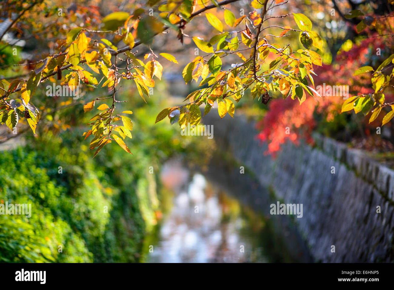 Kyoto, Japan at Philosopher's Path in the autumn. - Stock Image