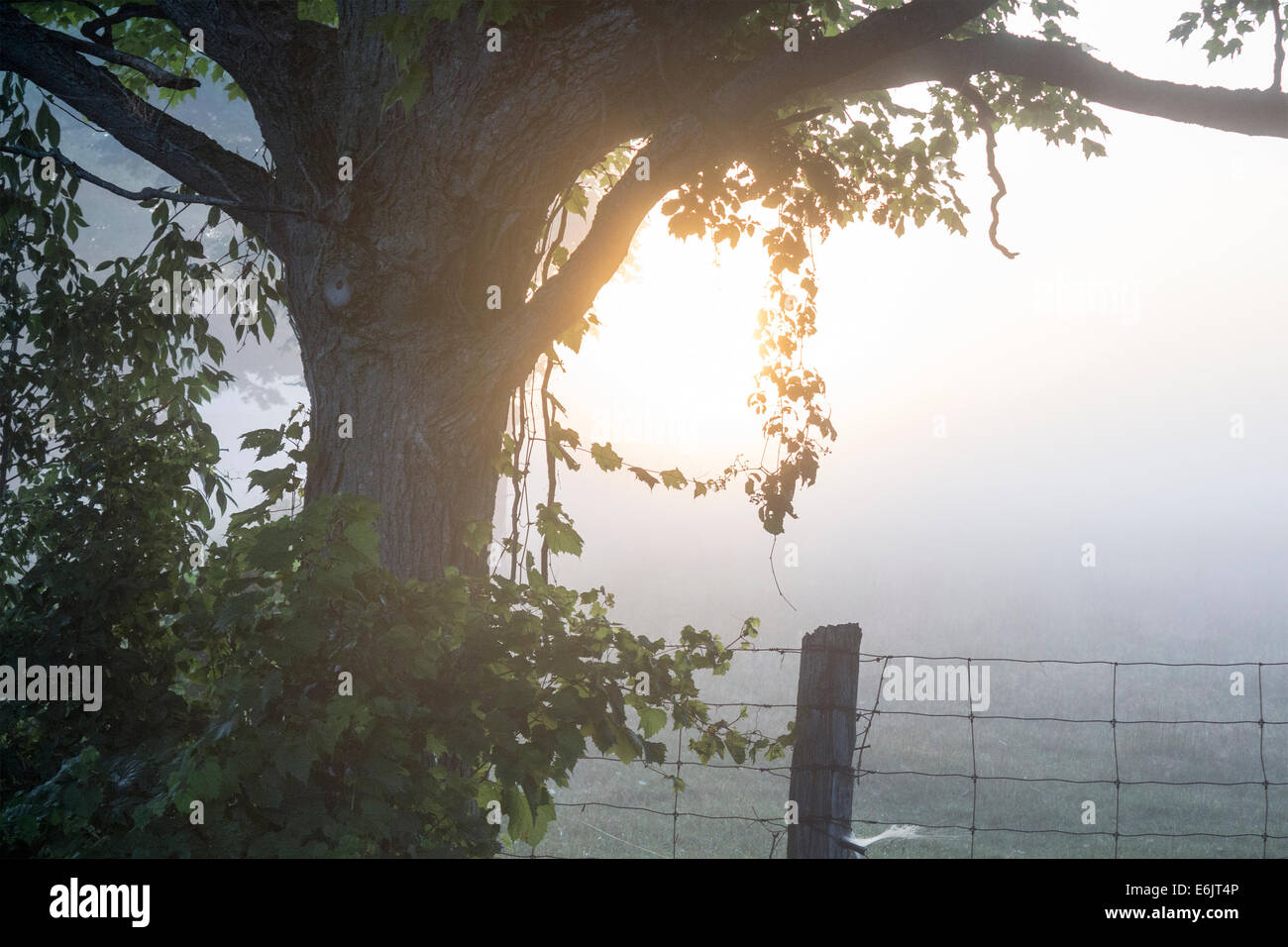 early-morning-sunrise-over-a-farm-with-the-sun-streaming-through-the-E6JT4P.jpg