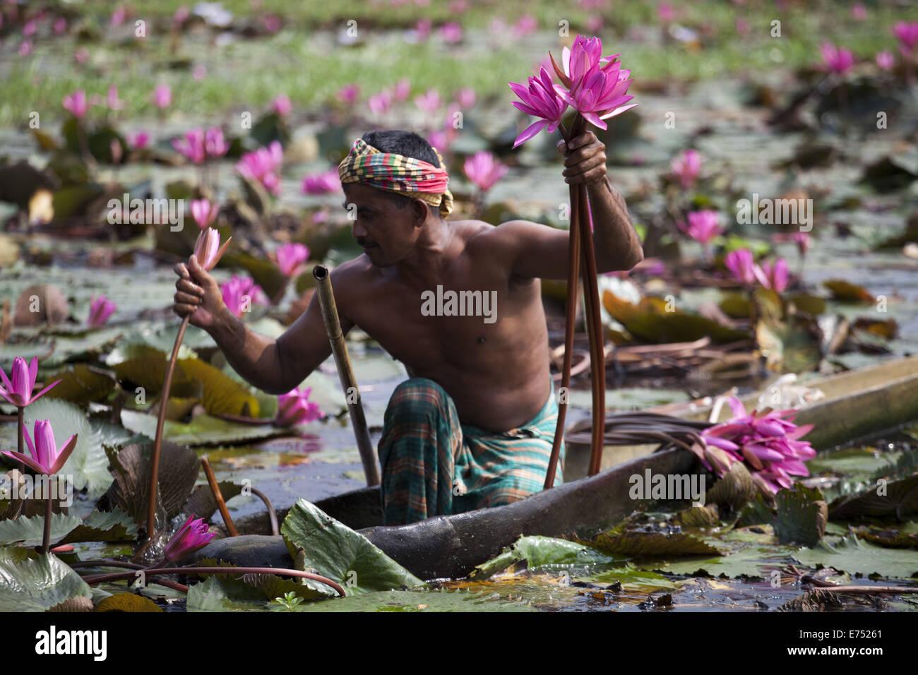 Dhaka bangladesh 7th sep 2013 water lily the national flower of 7th sep 2013 water lily the national flower of bangladeshduring the rainy season in banglaadesh water lilies bloom in wetlands izmirmasajfo