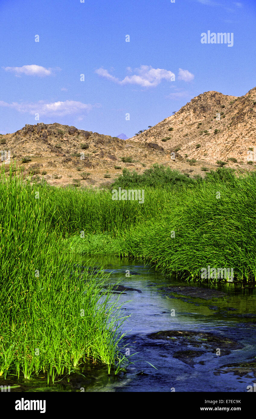 THERMAL RIVER WITH HOT WATER RUNNING THROUGH REED BEDS IN AL LITH  SAUDI ARABIA - Stock Image