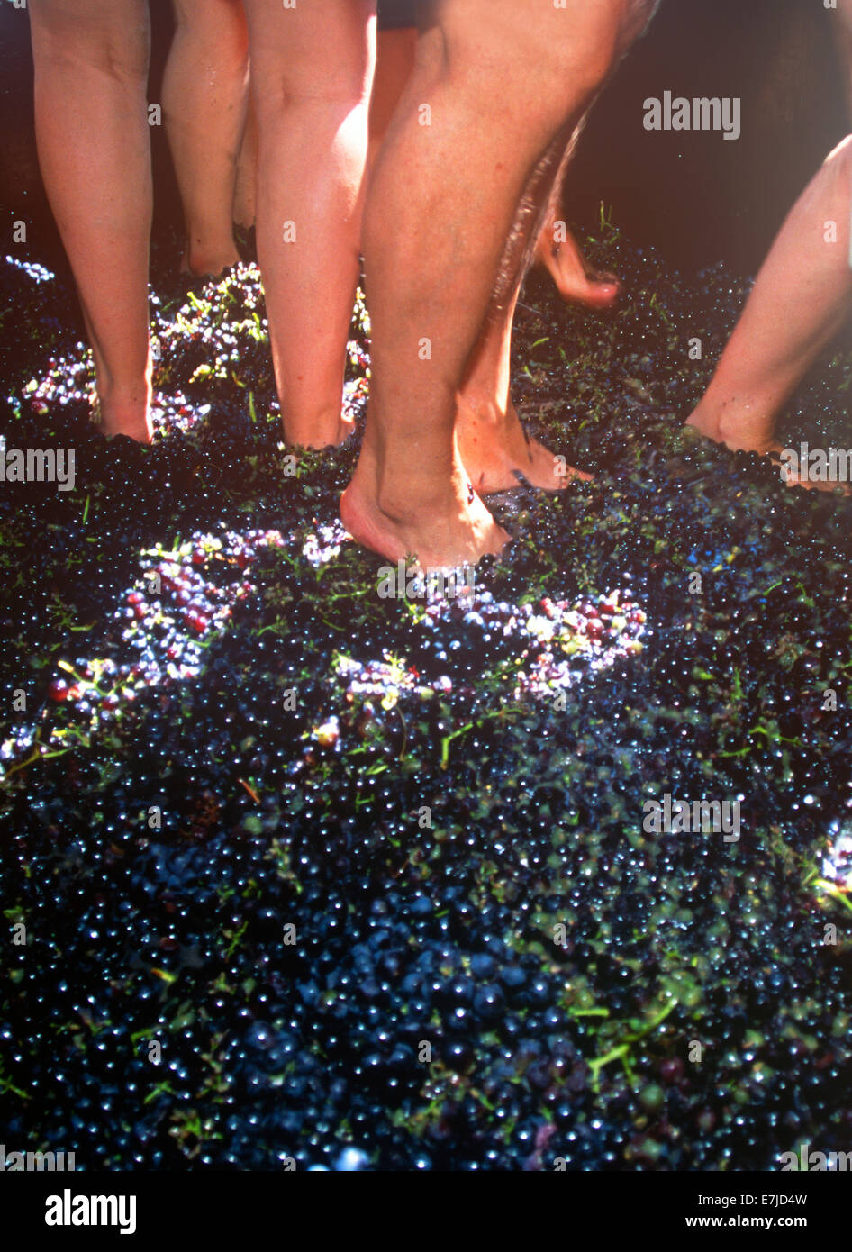 Wine Harvest Festival, Camara de Lobos, Madeira, Portugal Stock Photo