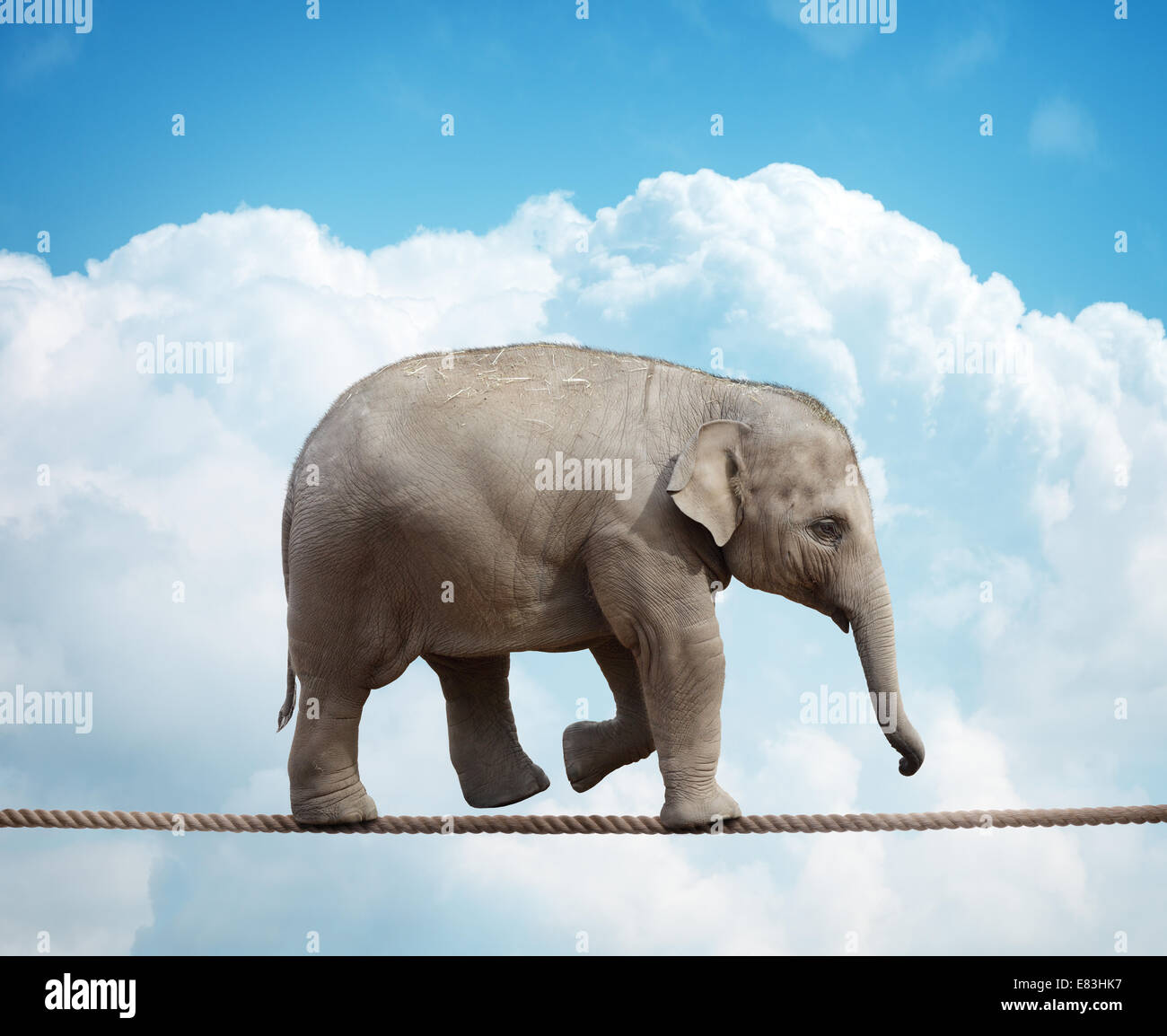 Elephant calf on tightrope - Stock Image