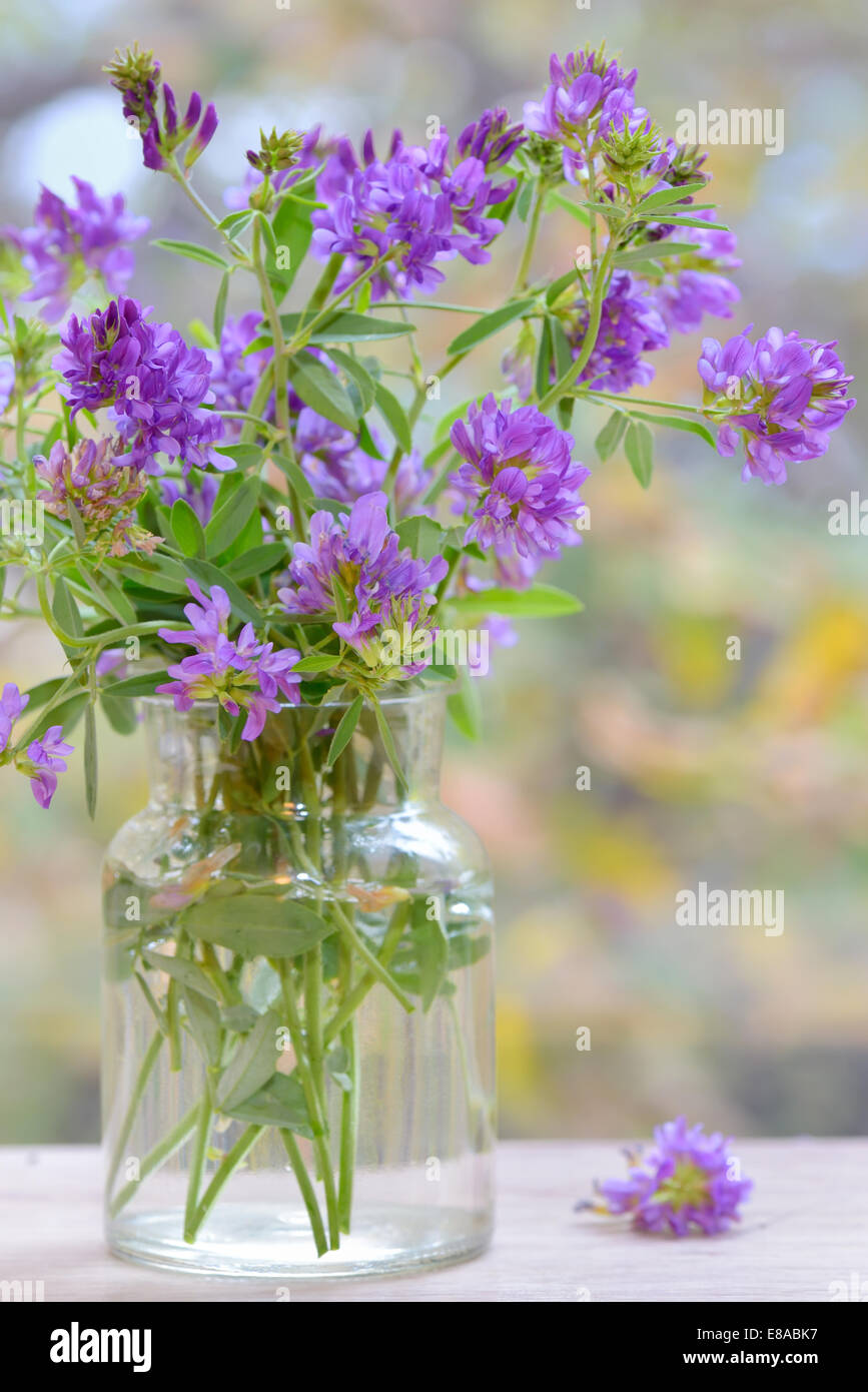 Bouquet flower in vase, isolate - Stock Image