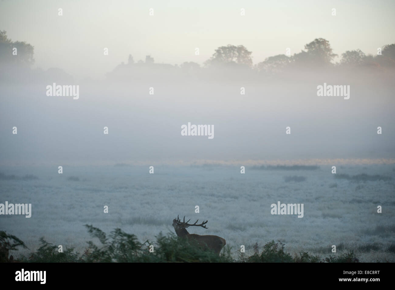 Richmond Park, SW London UK. 5th October 2014. Weather: London wakes up to a clear Autumn day with ground frost Stock Photo