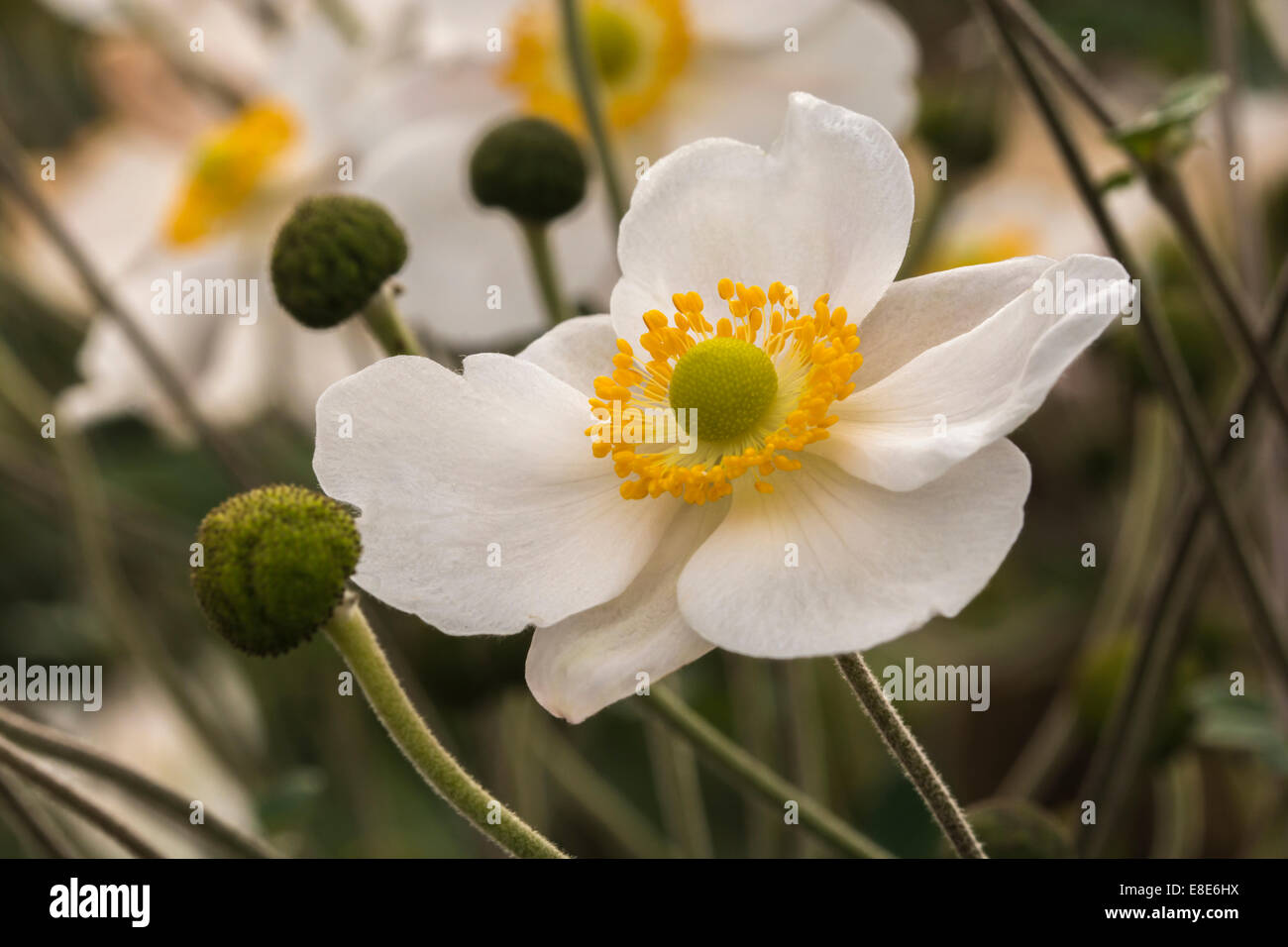 Fantastic white flowers with yellow center photos wedding and white with yellow center flower choice image flower decoration ideas mightylinksfo Images
