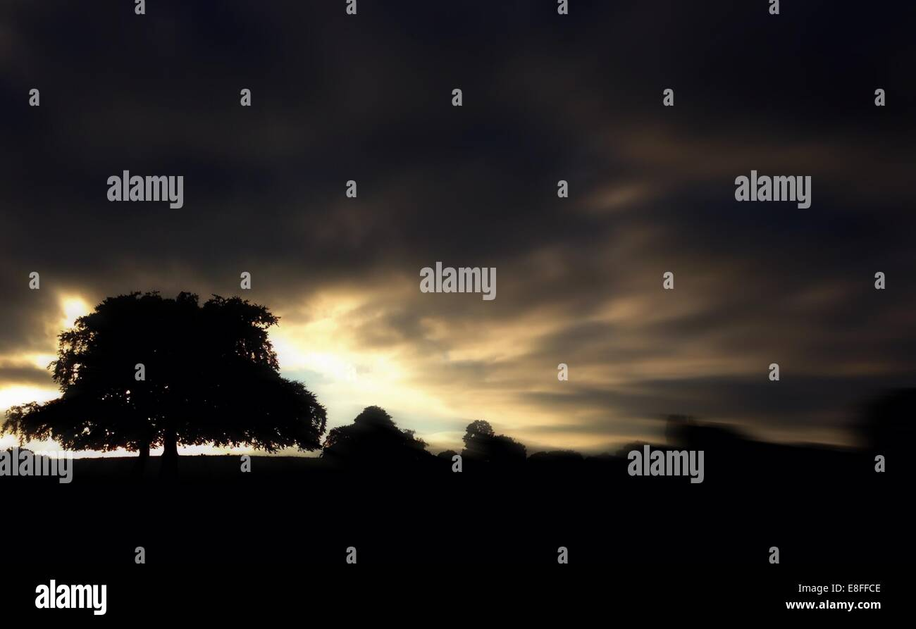 Silhouette of tree under storm cloud - Stock Image