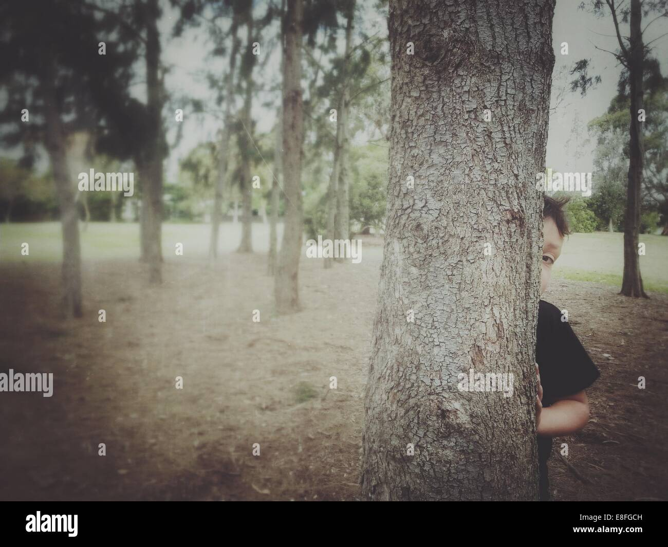 Boy hiding behind a tree - Stock Image