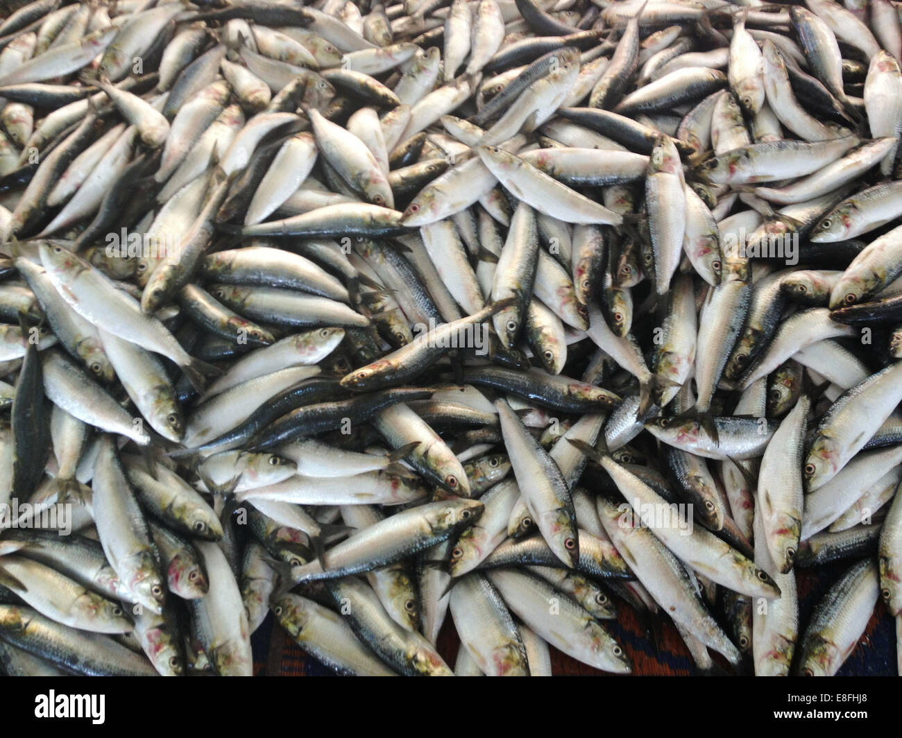 Oman, Muscat, Sardines for sale at market - Stock Image