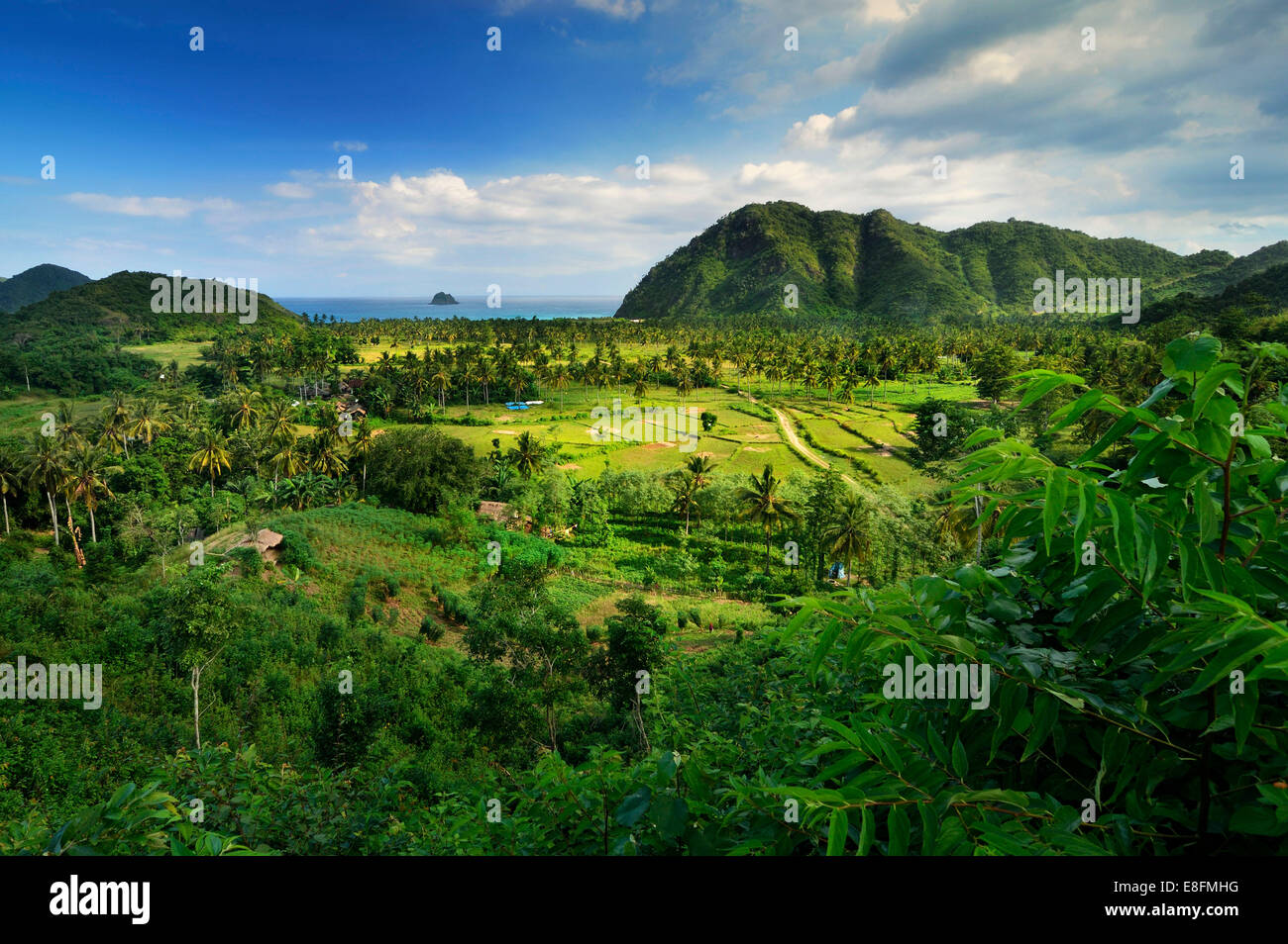 Indonesia, West Nusa Tenggara, Elevated view of farm, sea in background - Stock Image