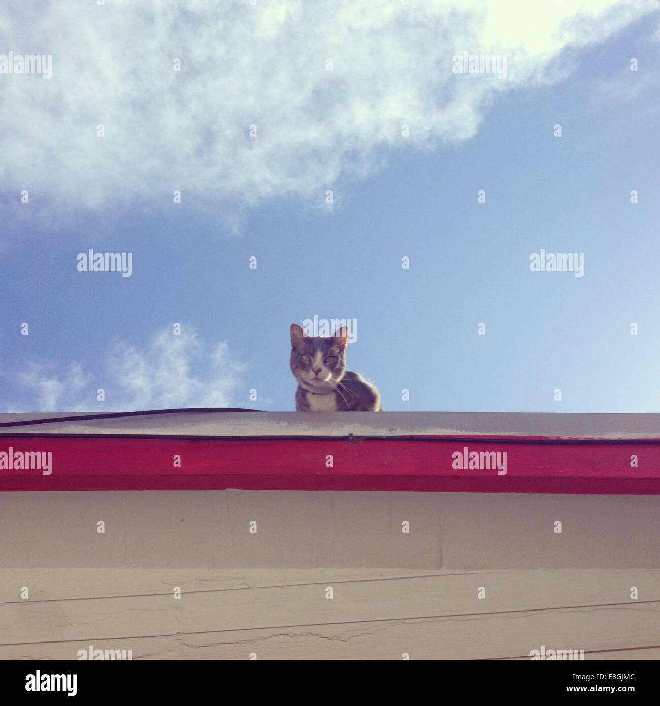 Cat sitting on a roof - Stock Image
