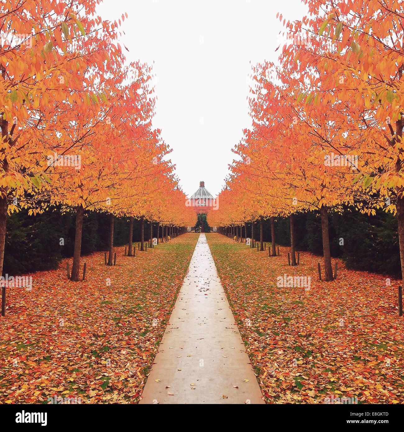 Denmark, Copenhagen, Treelined path in autumn - Stock Image