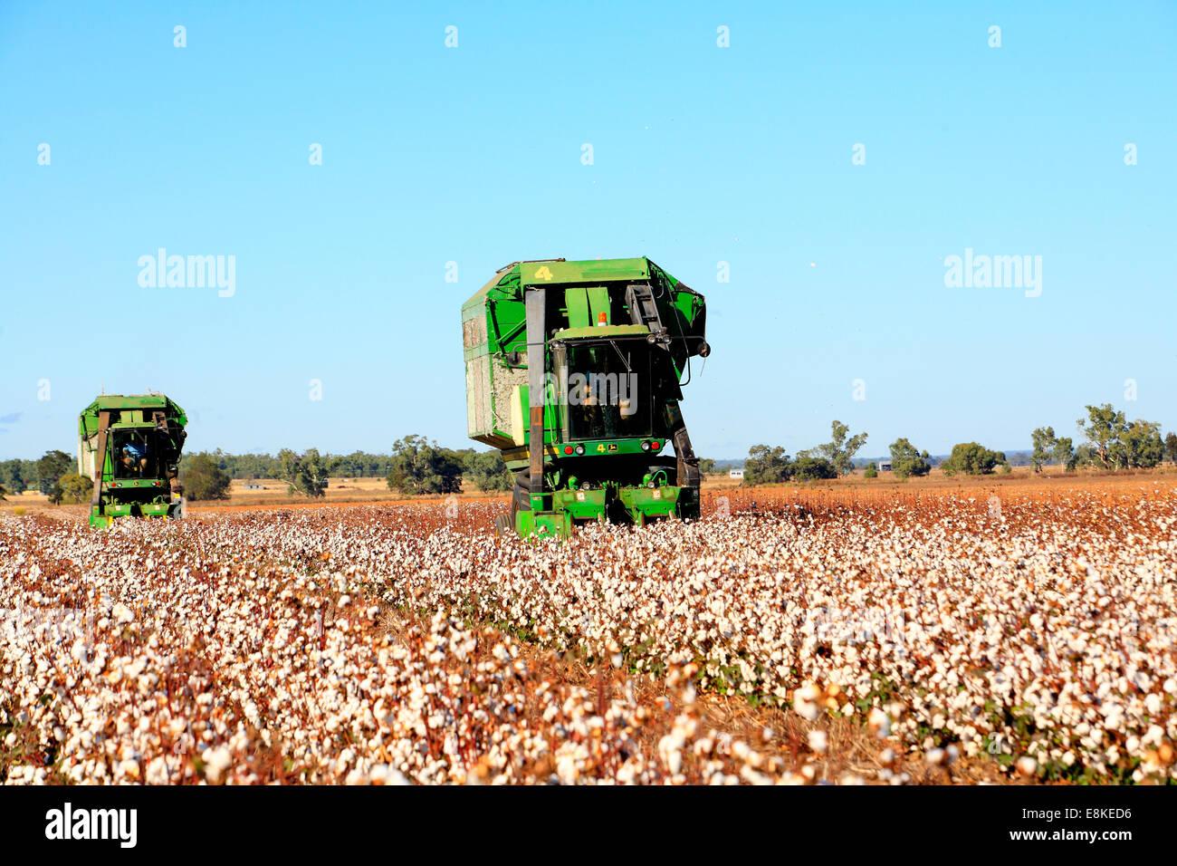 two-john-deere-cotton-harvesting-machines-narrabri-western-plains-E8KED6.jpg