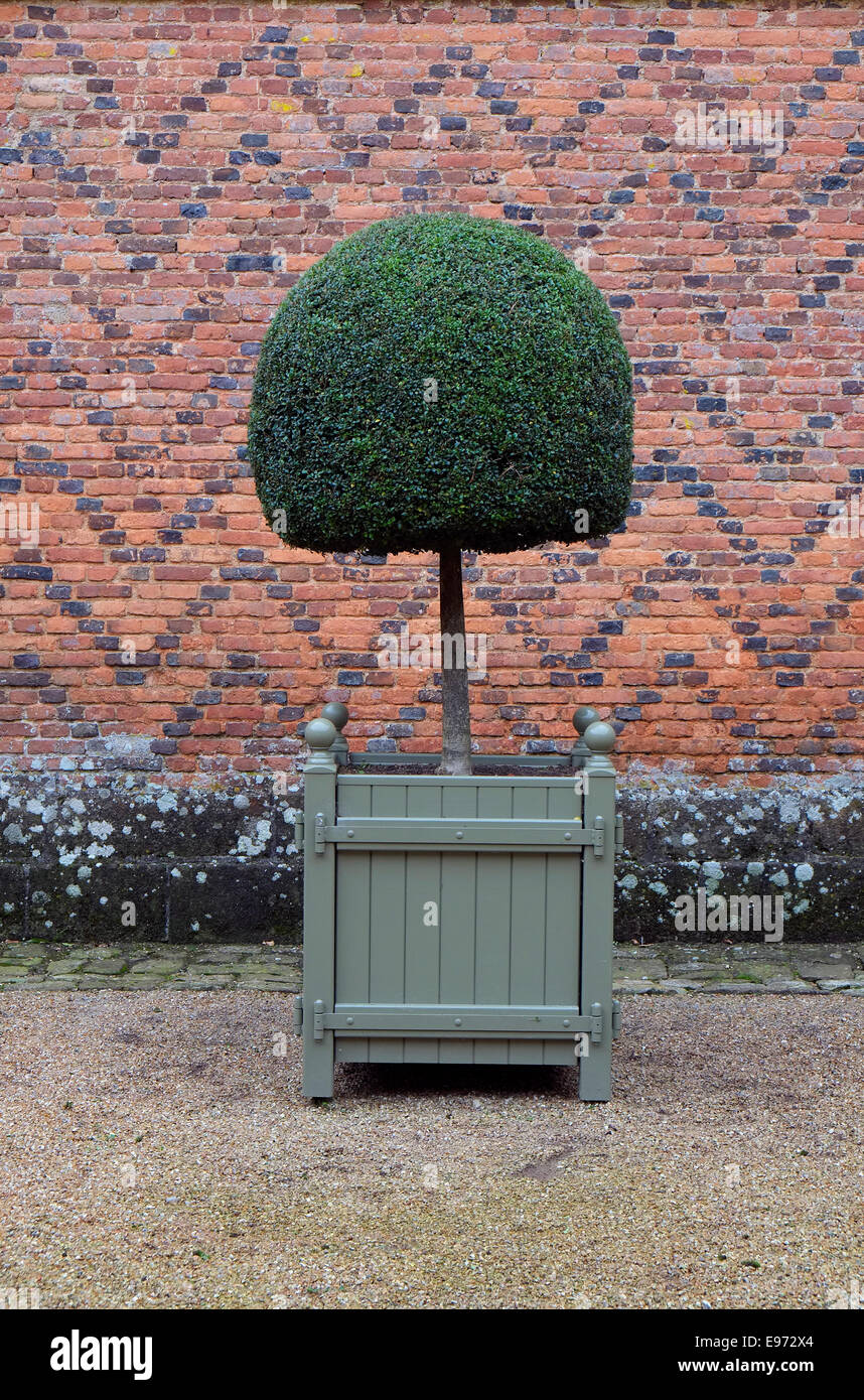Topiary Shaped Tree In Large Wooden Planter Stock Photo 74529340