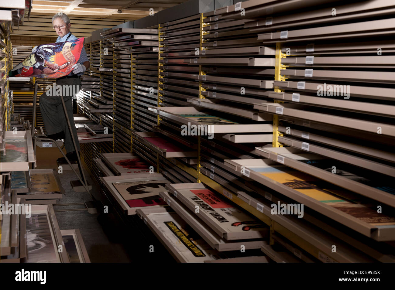 portrait of male member of staff at the BFI archive with all of the vintage film posters in storage draws to preserve - Stock Image