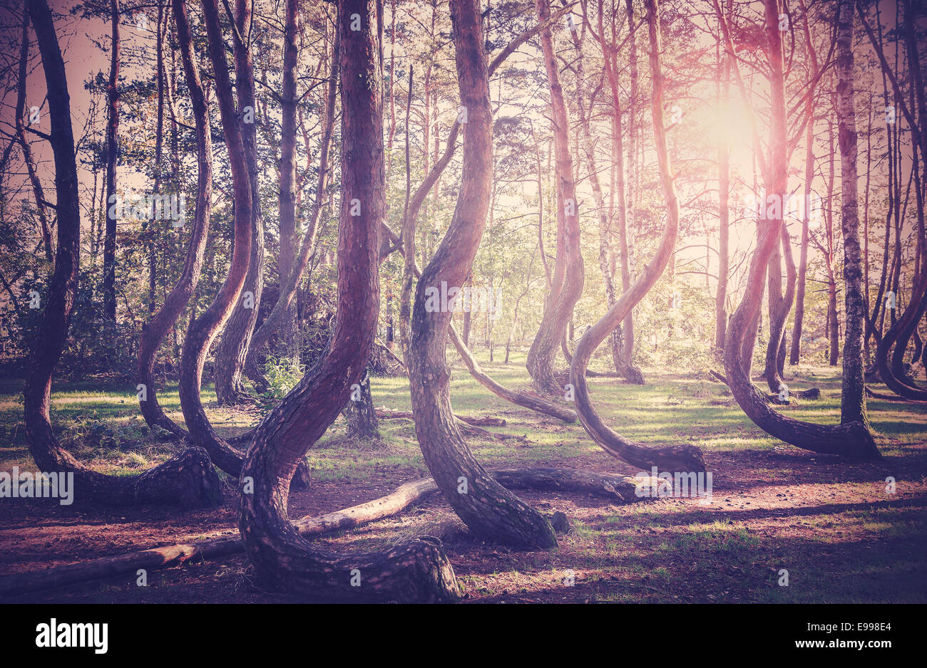 Vintage filtered picture of sunset at mysterious forest. - Stock Image