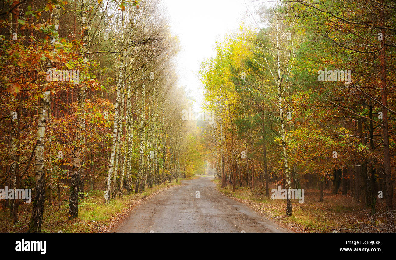 Pathway through a forest in autumn. - Stock Image