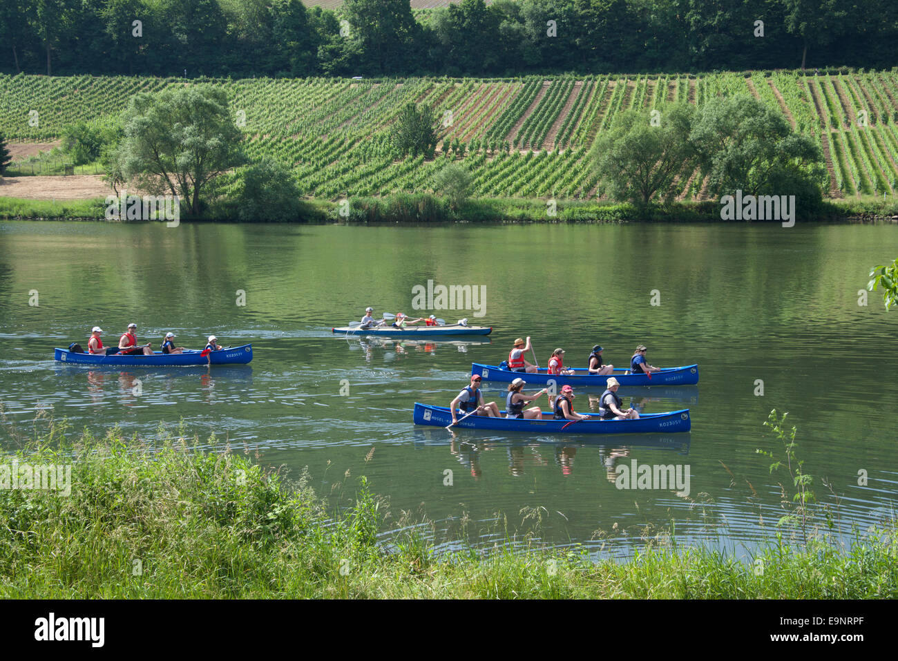 Paddling canoes Moselle River near Zell Moselle Valley Germany - Stock Image