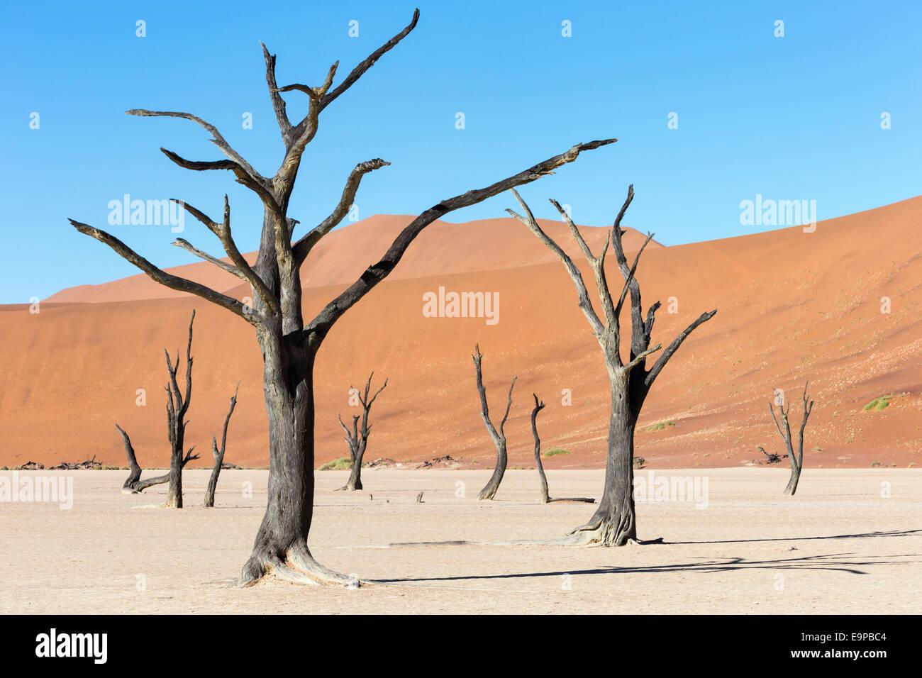 Dead Vlei, Namib Desert, Namibia - Stock Image