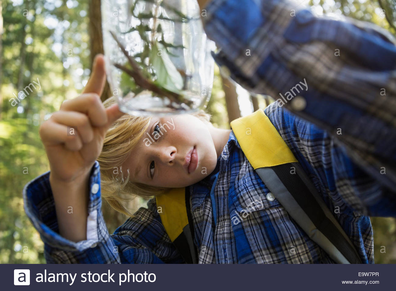 Curious boy in woods examining plants in jar - Stock Image