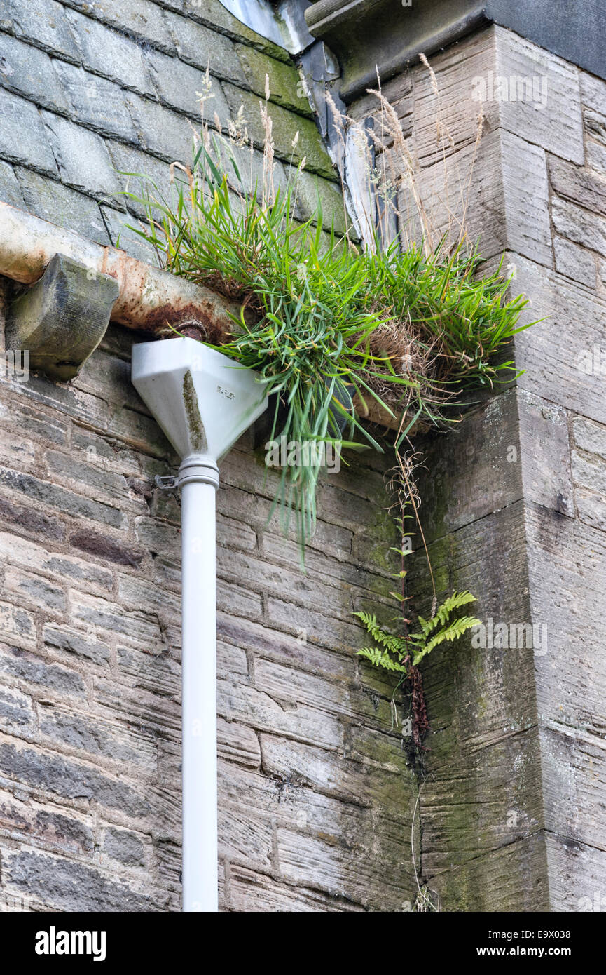 Blocked gutters and downpipes in an abandoned Victorian building, UK Stock Photo