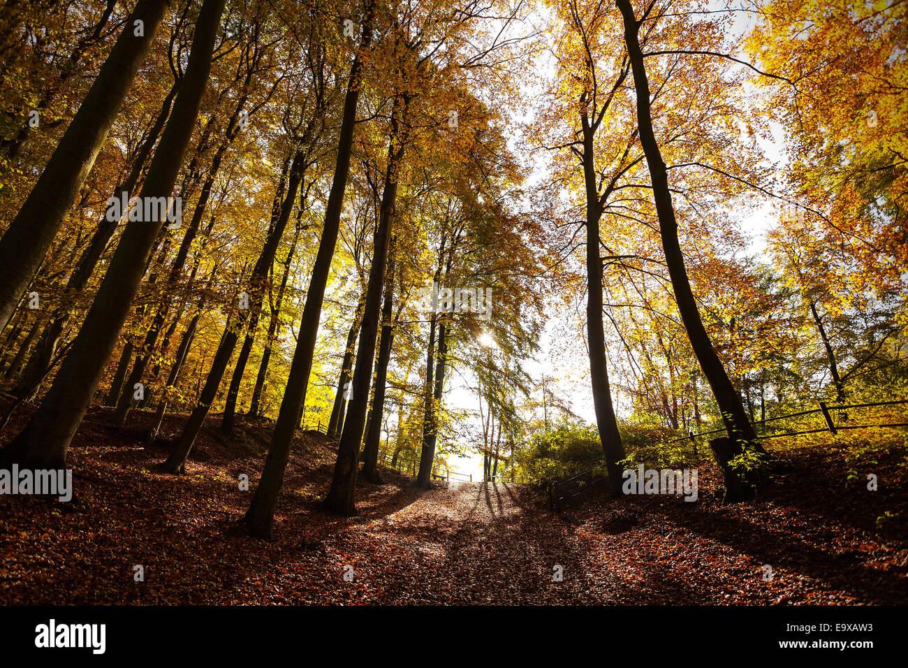 Mysterious autumn forest landscape. - Stock Image
