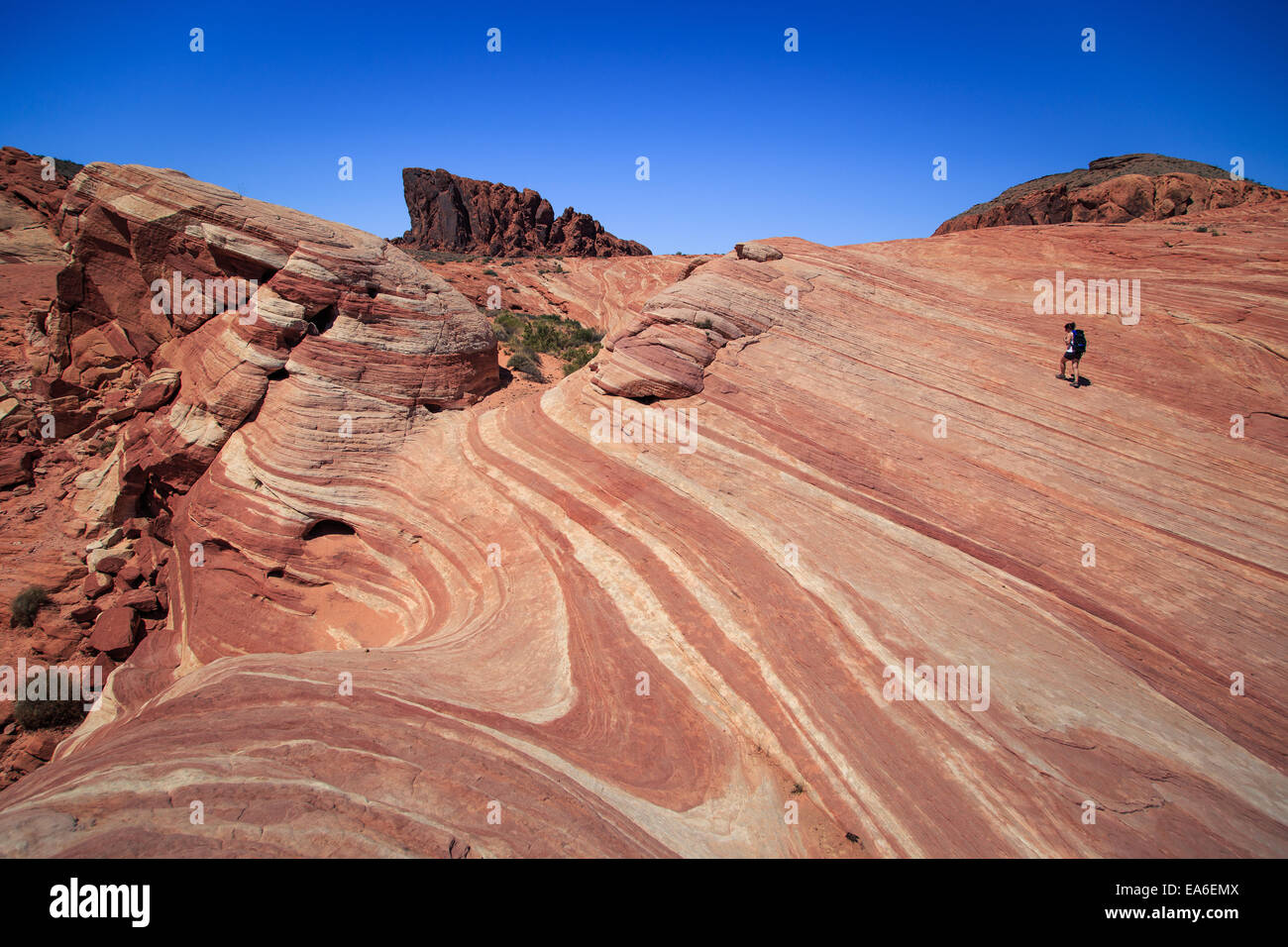 USA, Nevada, Clark County, White Domes Road, Lone hiker on Fire Wave in Valley of Fire State Park - Stock Image