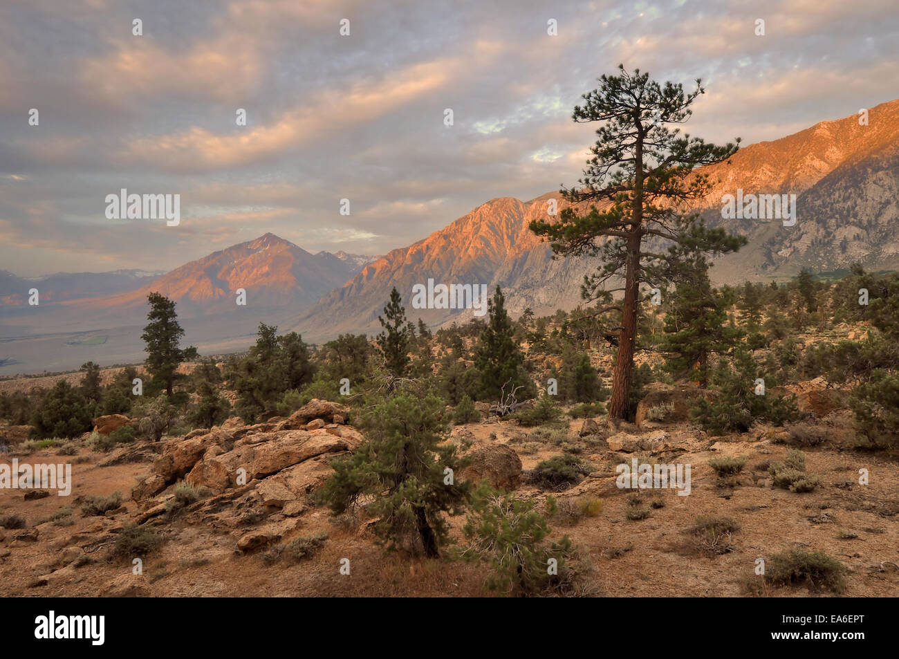 USA, California, Sunrise of Wheeler Ridge and Mt Tom - Stock Image
