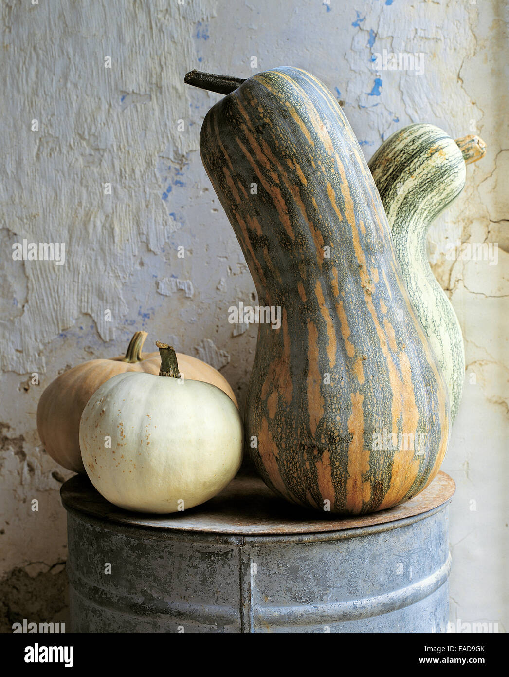 various squash and gourds at farm - Stock Image