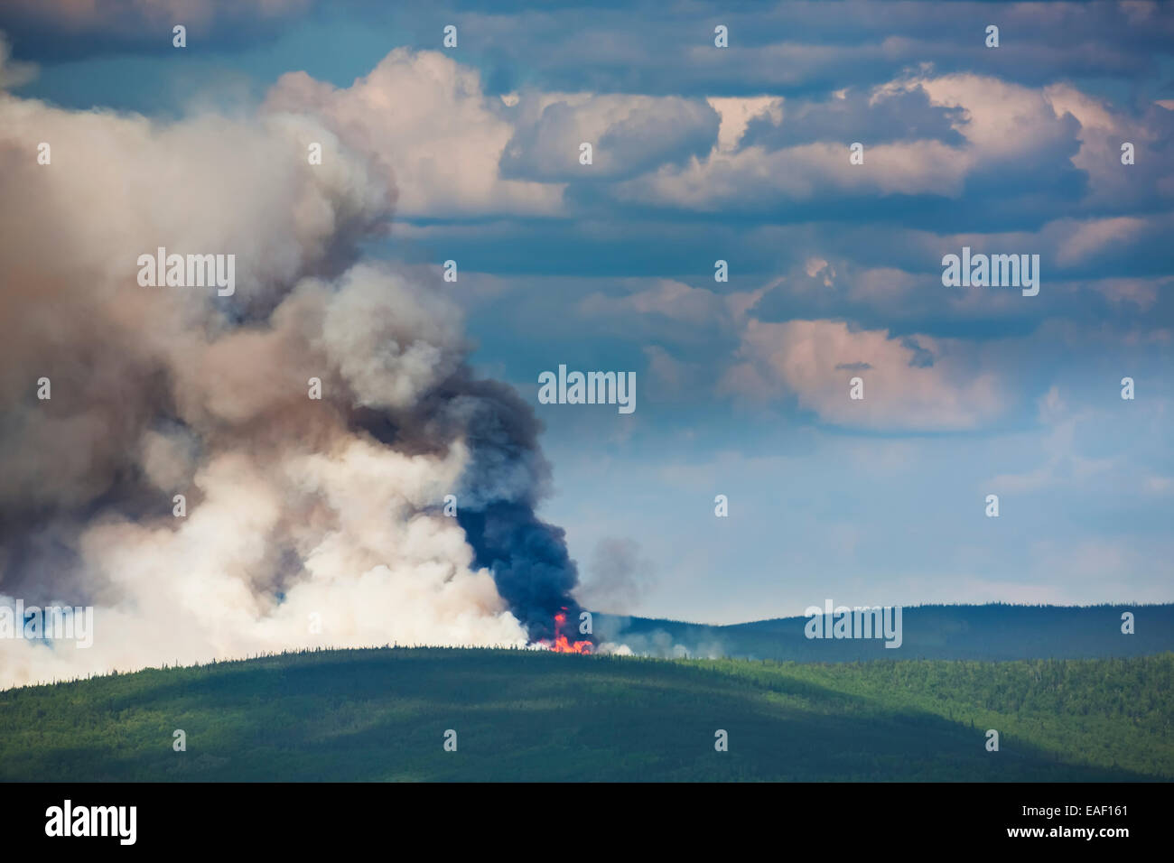 Smoke,Destruction,Alaska,Forest Fire,Forest - Stock Image