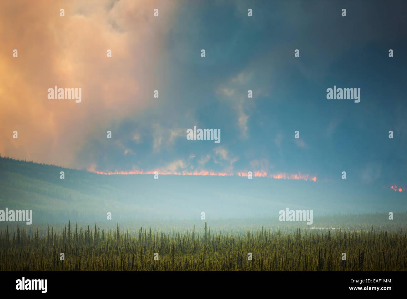 Smoke,Destruction,Alaska,Forest Fire,Hastings - Stock Image